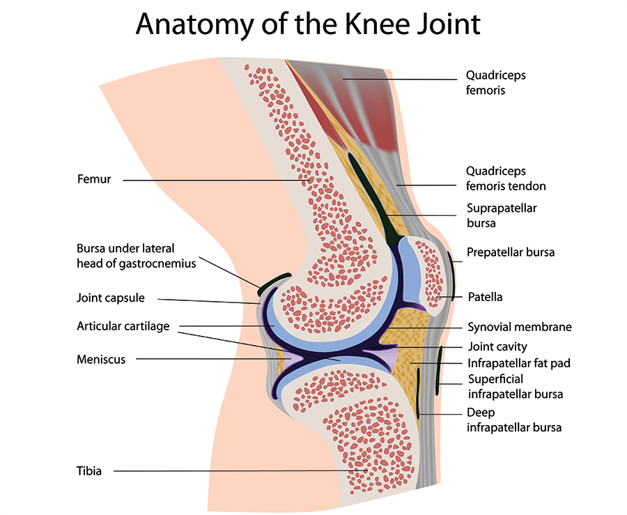Knee joint pain ccuart Choice Image